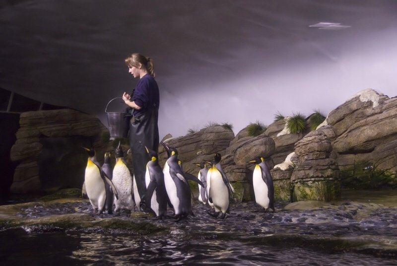 pinguins_voeren800.jpg