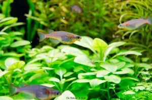 hk2011_jaap-31