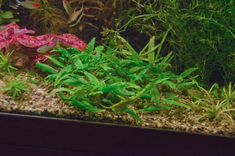 Het aquarium van Wil van Zanten op 26 September 2012